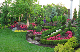 Посадка кустарников и деревьев